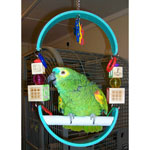 Macaw Parrot Swing by CScully2006