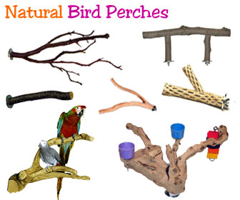 For Birds 10 Long Apple Perch\u2122