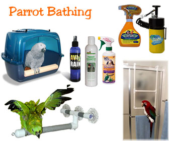 Bird Bath - Parrot Shower